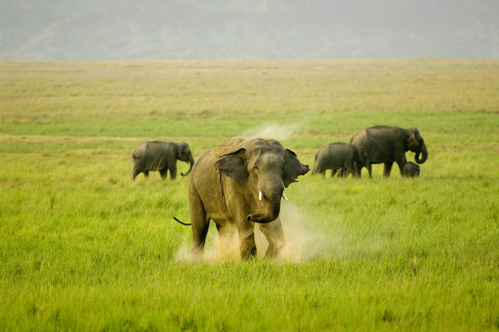 Elephants in Jim Corbett