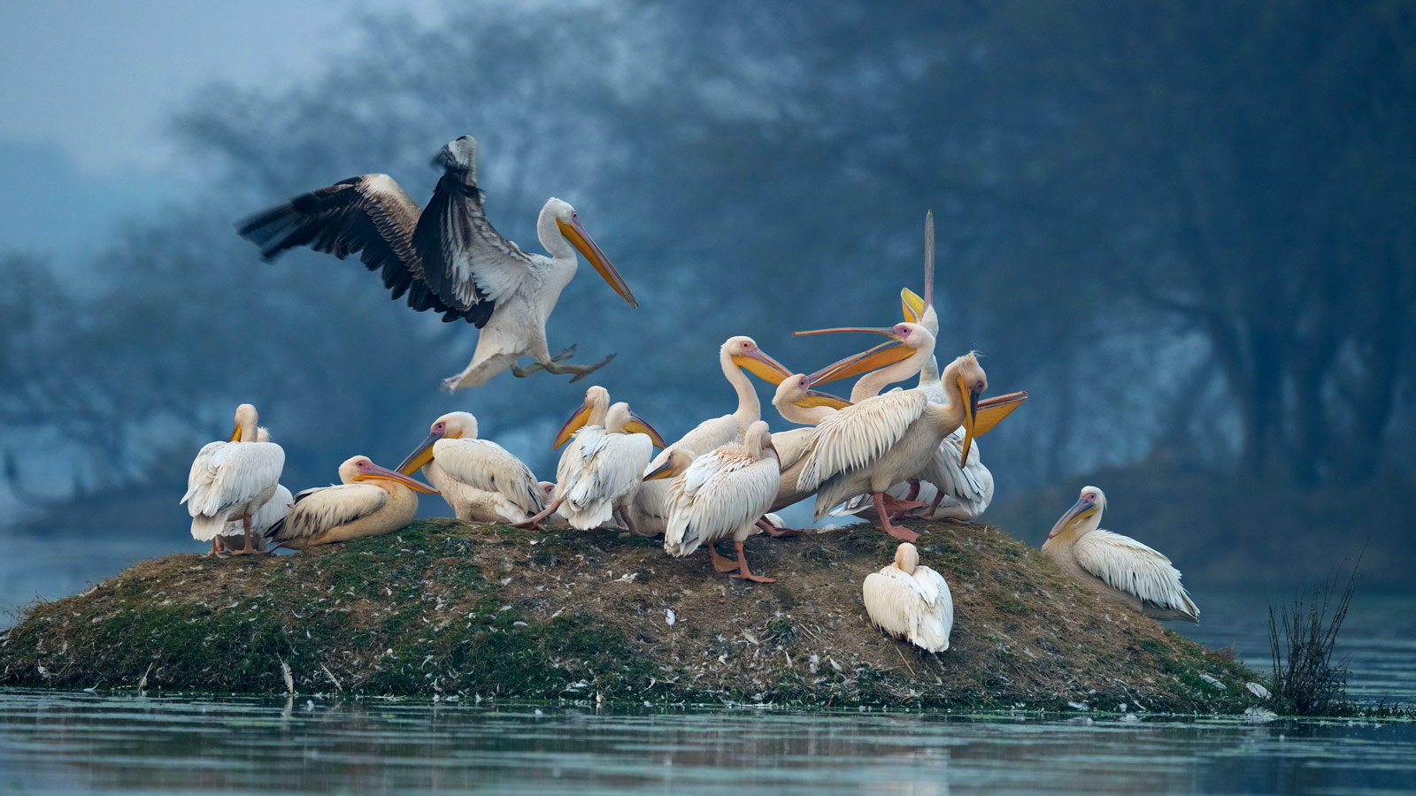 Bharatpur Bird Sanctuary