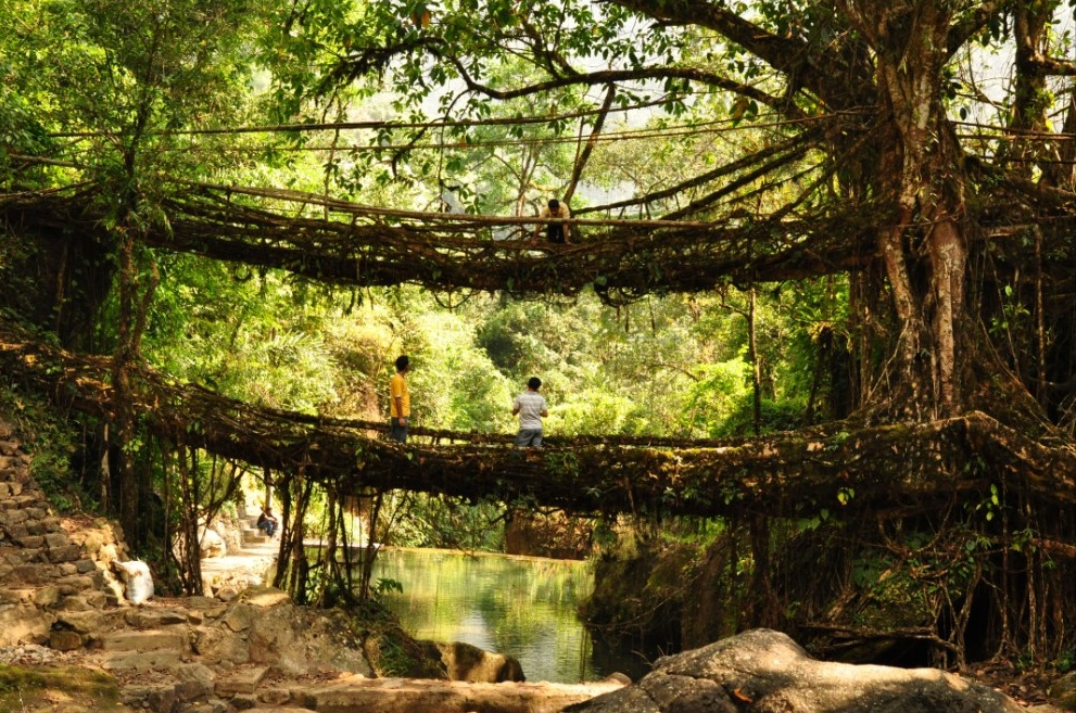 Double Decker Root Bridge in Cherrapunjee