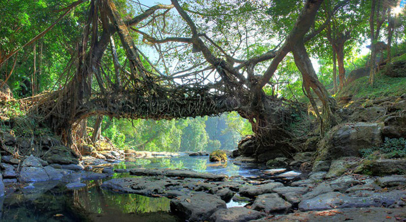 Living Root Bridge Cherrapunjee