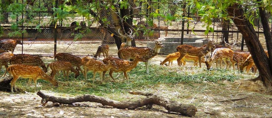 Deer Park, Hauz Khas, Delhi