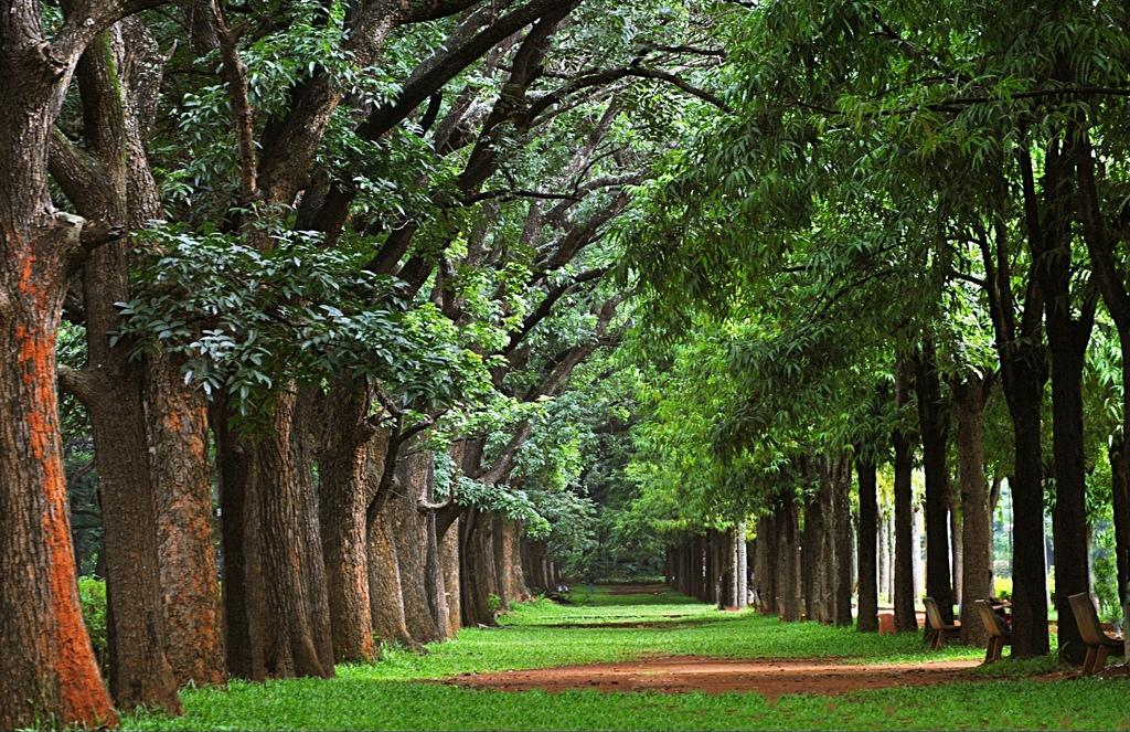 Cubbon Park A Beautiful Park In Heart Of Bangalore City