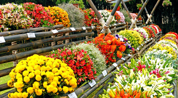 Flower Show Lalbagh