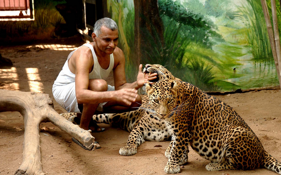 Dr.Prakash Amte with Leopards