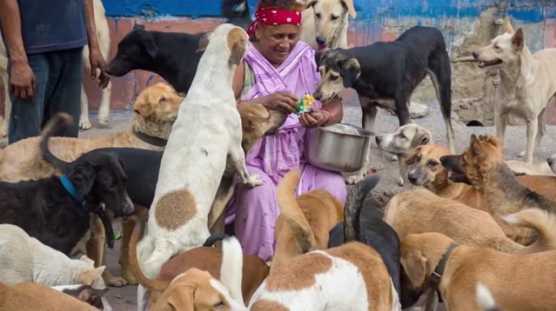 Pratima Devi Delhi's Dog Lady