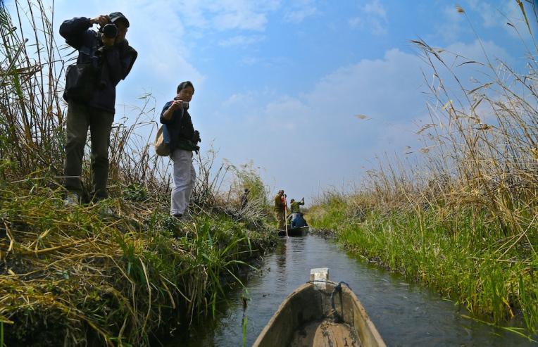 Keibul Lamjao Floating National Park Manipur