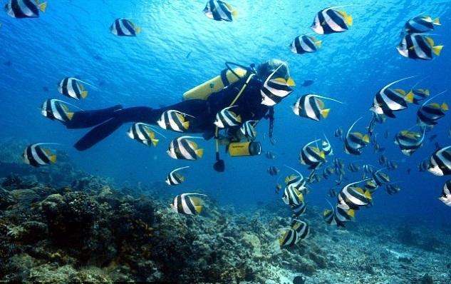 Scuba Diving in Malvan Island
