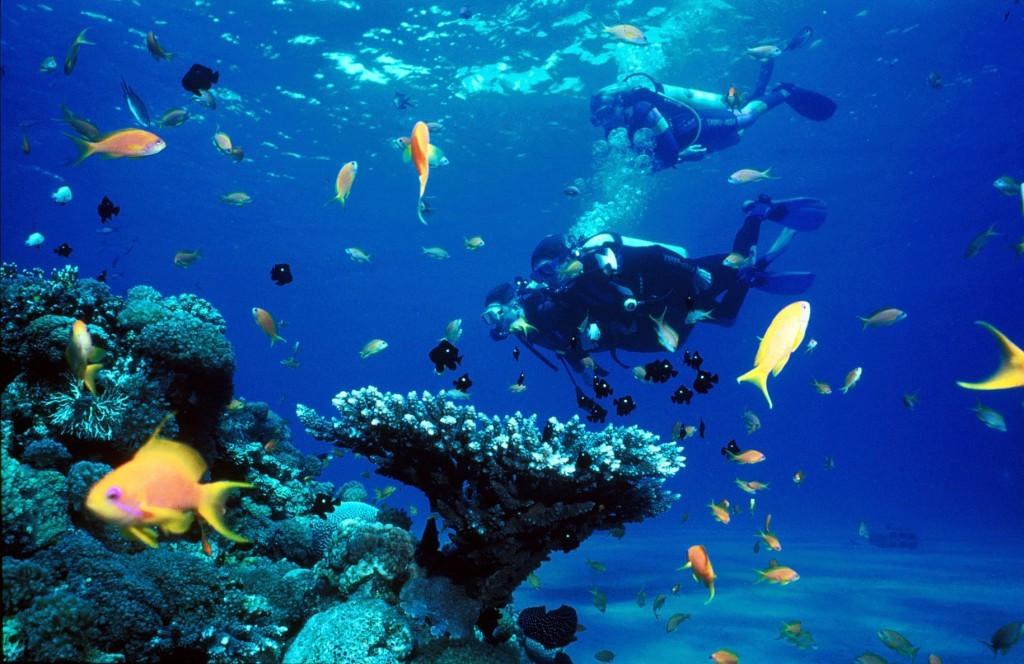 Scuba Diving in Pigeon Island