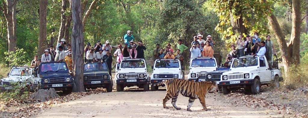 Banghavgarh National Park