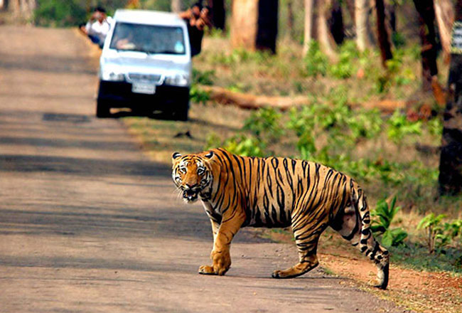 Ranthambore Wildlife Sanctuary