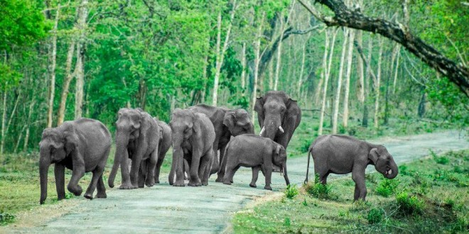 Top 10 National Parks in India