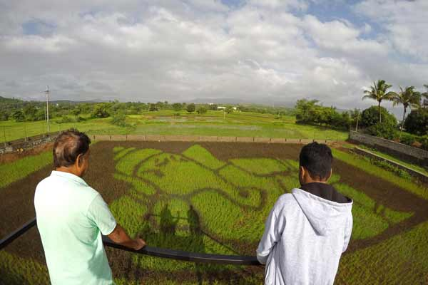 Paddy Art in Pune