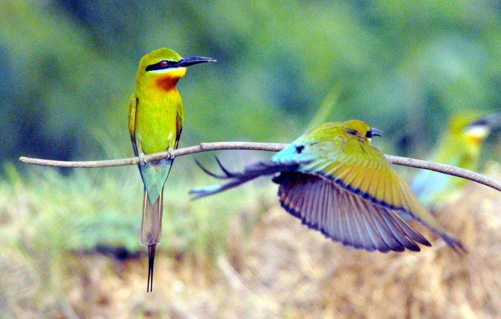 Ranganathittu Bird Sanctuary , Karnataka