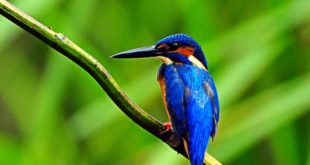 Top 10 Bird Sanctuaries in India