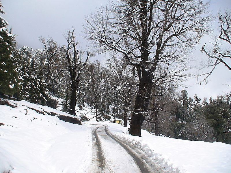 Munsiyari Snowfall