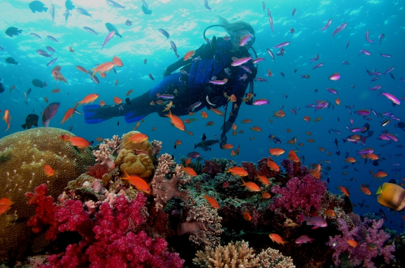 Snorkelling in Andaman and Nicobar Islands