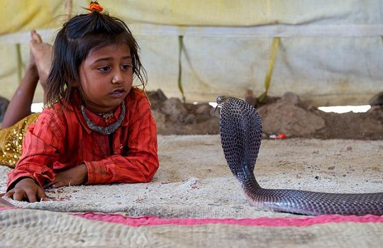 Shetpal - India's Land of Snakes
