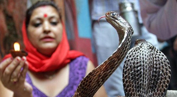 Shetpal - India's Village of Snakes