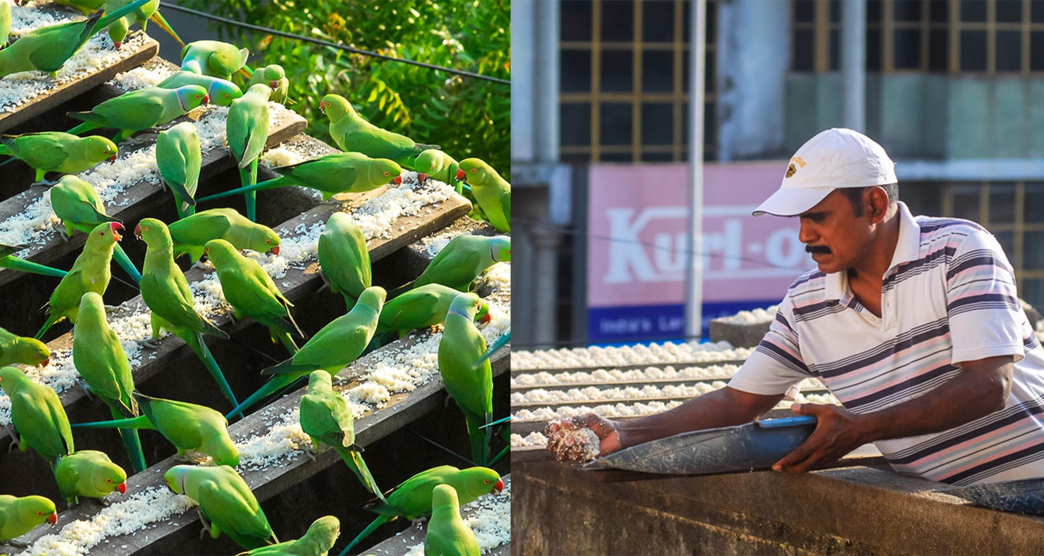 Joseph Sekar – India's Birdman who Feeds 4,000 Parakeets every day