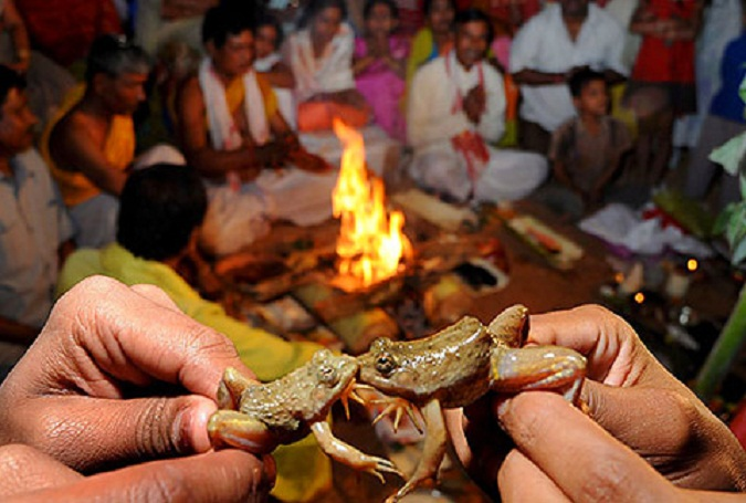 Frog Wedding in Assam