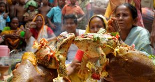 Frog Wedding in India