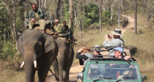Exploring national parks in India's heartland - Madhya Pradesh
