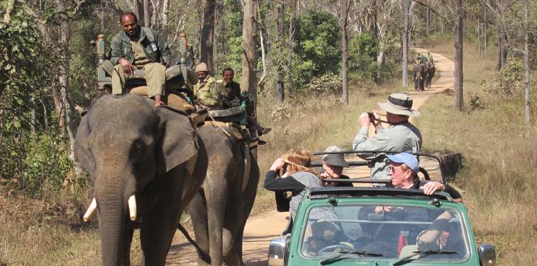 Exploring national parks in India's heartland - Madhya Pradesh