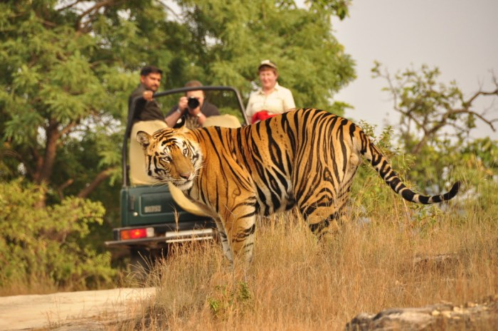 Open Jeep Safari in Corbett National Park