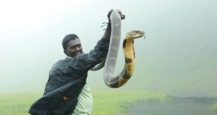 Vava Suresh - Kerala's 'Snake Man' who has saved more than 100 Cobras!