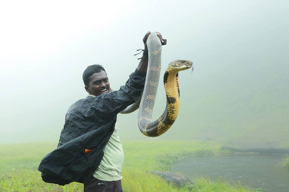 Vava Suresh - Kerala's 'Snake Man' who has saved more than 100 Cobras!