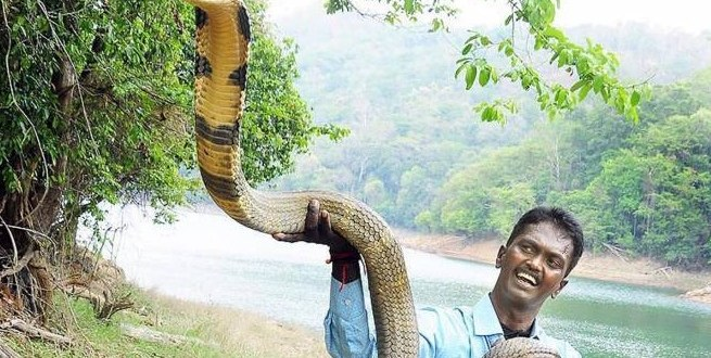 Vava Suresh has Rescued more than 100 Cobras and 30,000 regular Snakes
