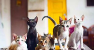 Cat Café Studio, Mumbai - A Cafe for Stray Cats