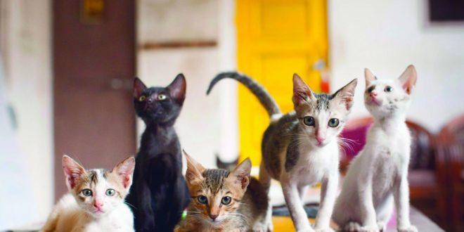 Cat Café Studio, Mumbai - A Cafe for Stray Cats