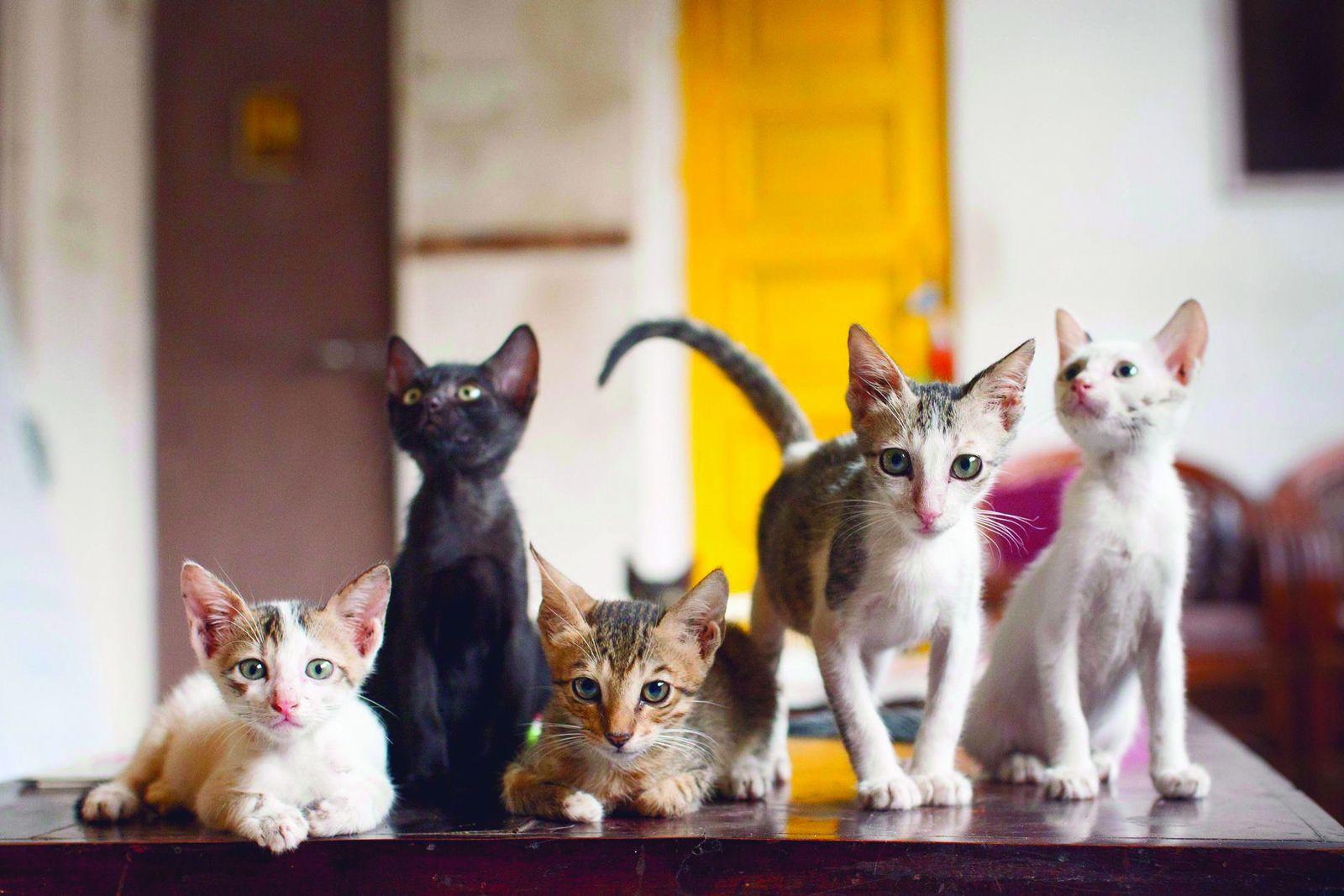 Cat Café Studio, Mumbai – A Café for Stray Cats