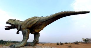 Balasinor Fossil Park, Gujarat - World's largest Dinosaur Fossil Park