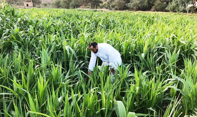 How to Buy Agricultural Land in India - Documents & Process